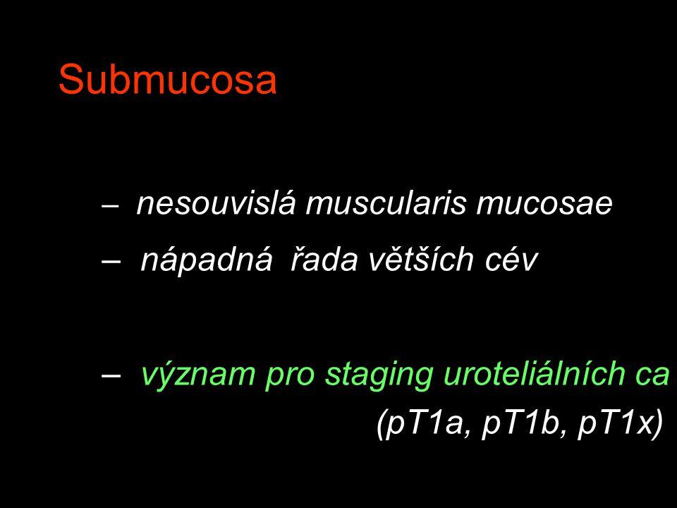 Submucosa – nesouvislá muscularis mucosae – nápadná řada větších cév – význam pro staging uroteliálních ca (pT1a, pT1b, pT1x)