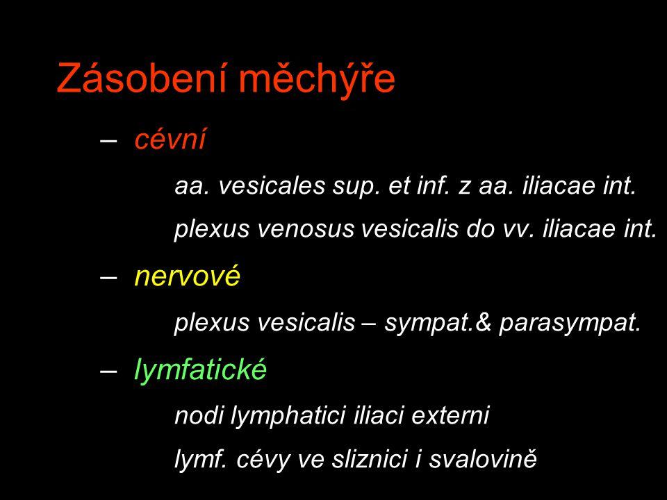 Zásobení měchýře – cévní aa. vesicales sup. et inf. z aa. iliacae int. plexus venosus vesicalis do vv. iliacae int. – nervové plexus vesicalis – sympa