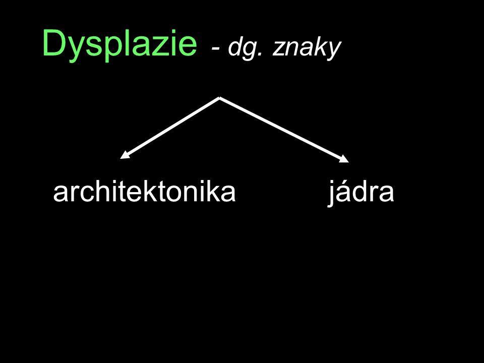 Dysplazie - dg. znaky architektonikajádra