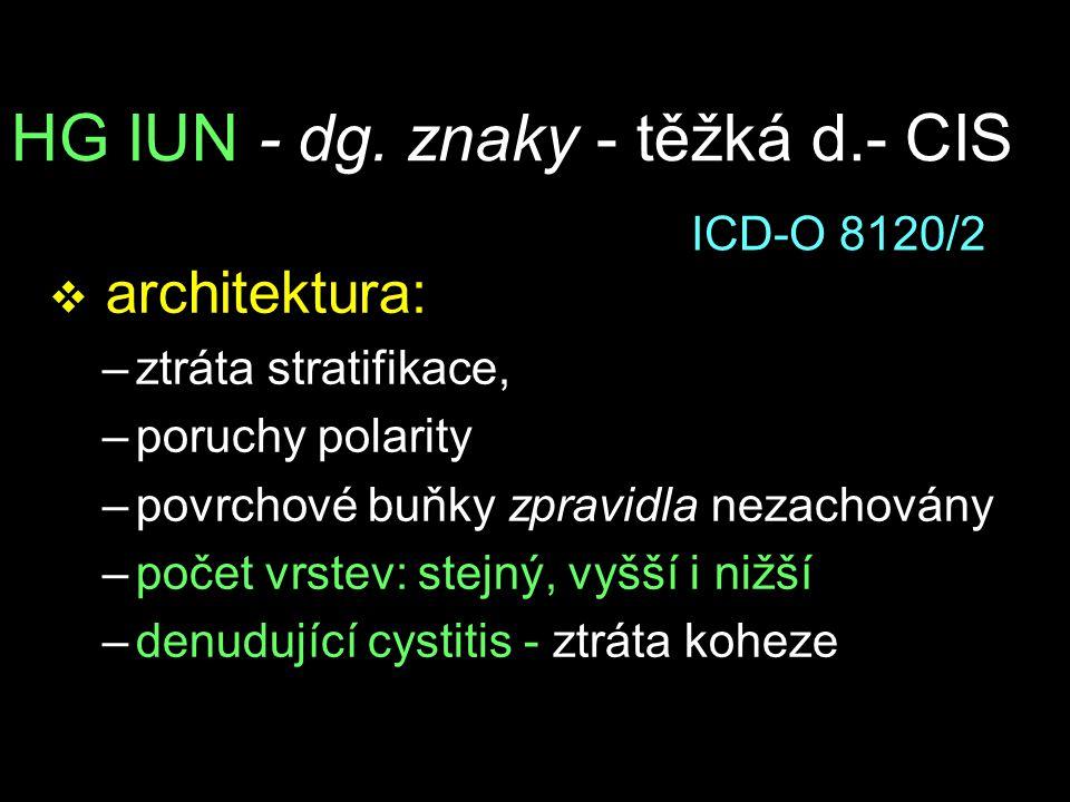 HG IUN - dg. znaky - těžká d.- CIS v architektura: –ztráta stratifikace, –poruchy polarity –povrchové buňky zpravidla nezachovány –počet vrstev: stejn