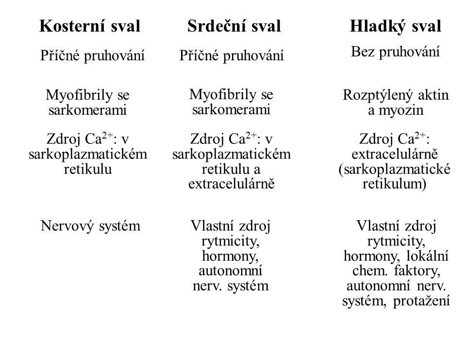 Kosterní svalSrdeční svalHladký sval Příčné pruhování Bez pruhování Myofibrily se sarkomerami Rozptýlený aktin a myozin Zdroj Ca 2+ : v sarkoplazmatic