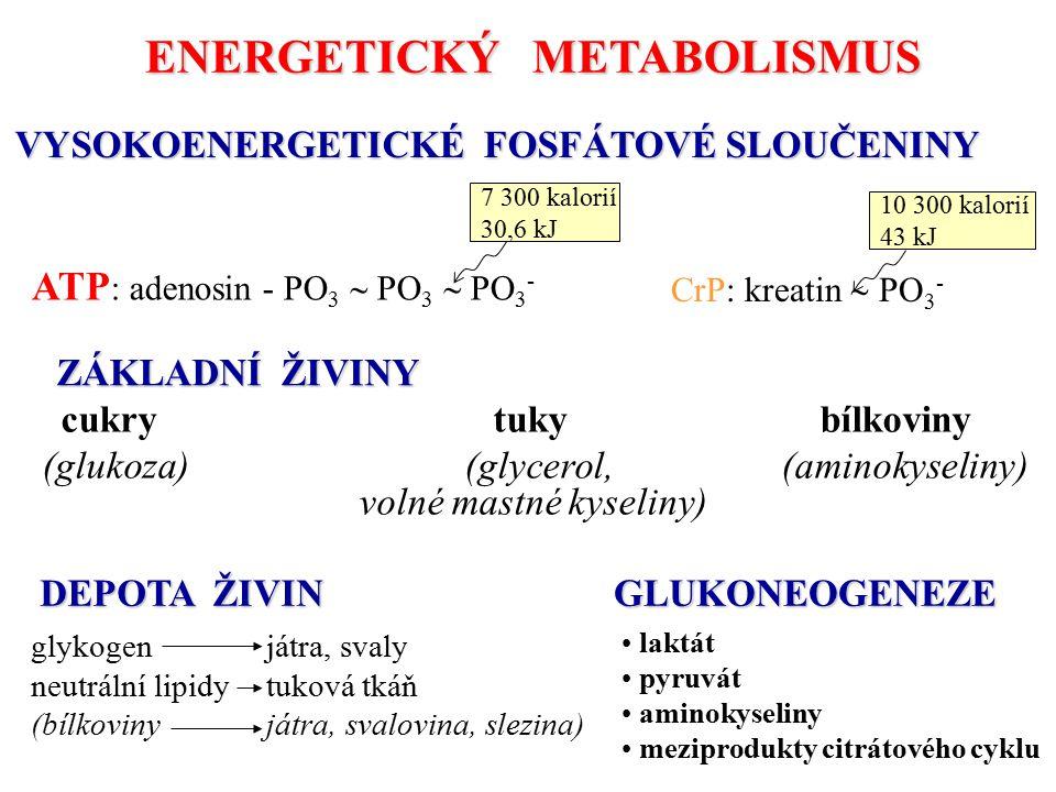 ENERGETICKÝ METABOLISMUS VYSOKOENERGETICKÉ FOSFÁTOVÉ SLOUČENINY ZÁKLADNÍ ŽIVINY DEPOTA ŽIVIN GLUKONEOGENEZE laktát pyruvát aminokyseliny meziprodukty