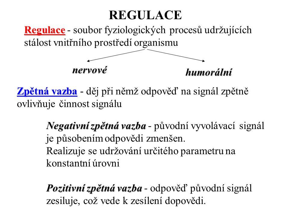 REGULACE Regulace Regulace - soubor fyziologických procesů udržujících stálost vnitřního prostředí organismu nervové humorální Zpětná vazba Zpětná vaz