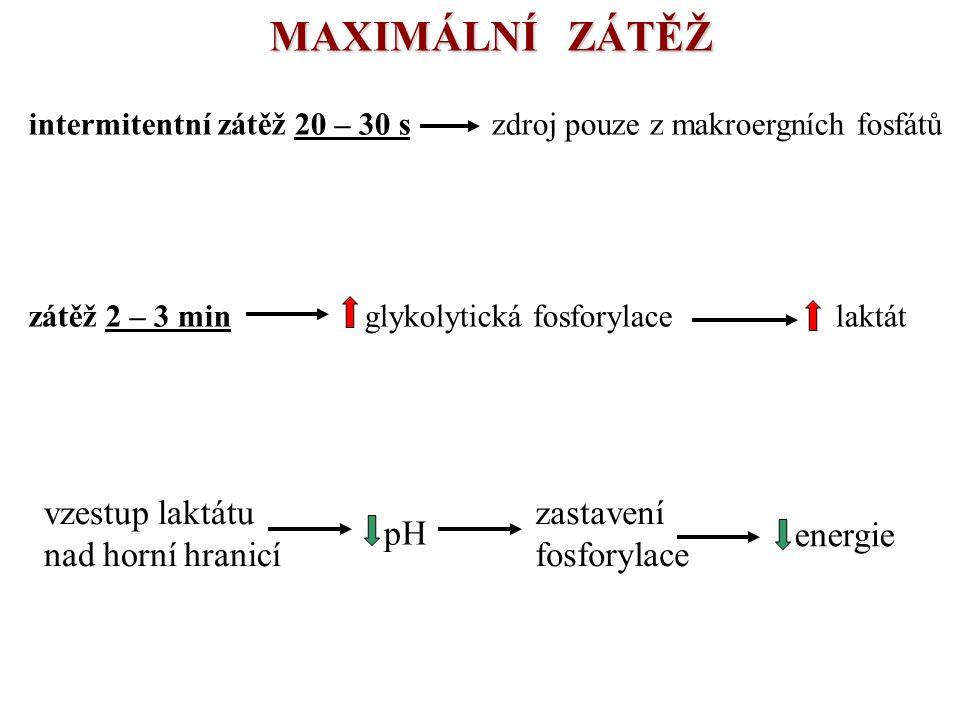 MAXIMÁLNÍ ZÁTĚŽ intermitentní zátěž 20 – 30 s zdroj pouze z makroergních fosfátů zátěž 2 – 3 min glykolytická fosforylace laktát vzestup laktátu nad h