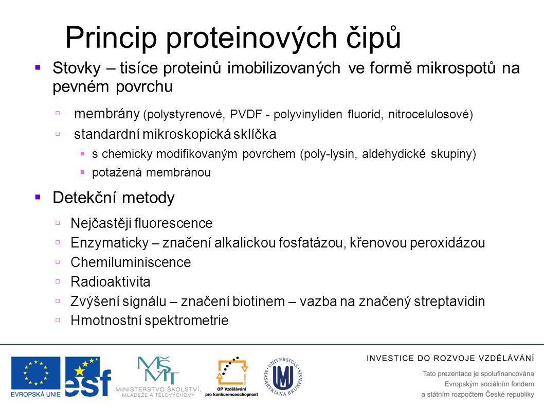 Princip proteinových čipů  Stovky – tisíce proteinů imobilizovaných ve formě mikrospotů na pevném povrchu  membrány (polystyrenové, PVDF - polyvinyliden fluorid, nitrocelulosové)  standardní mikroskopická sklíčka  s chemicky modifikovaným povrchem (poly-lysin, aldehydické skupiny)  potažená membránou  Detekční metody  Nejčastěji fluorescence  Enzymaticky – značení alkalickou fosfatázou, křenovou peroxidázou  Chemiluminiscence  Radioaktivita  Zvýšení signálu – značení biotinem – vazba na značený streptavidin  Hmotnostní spektrometrie