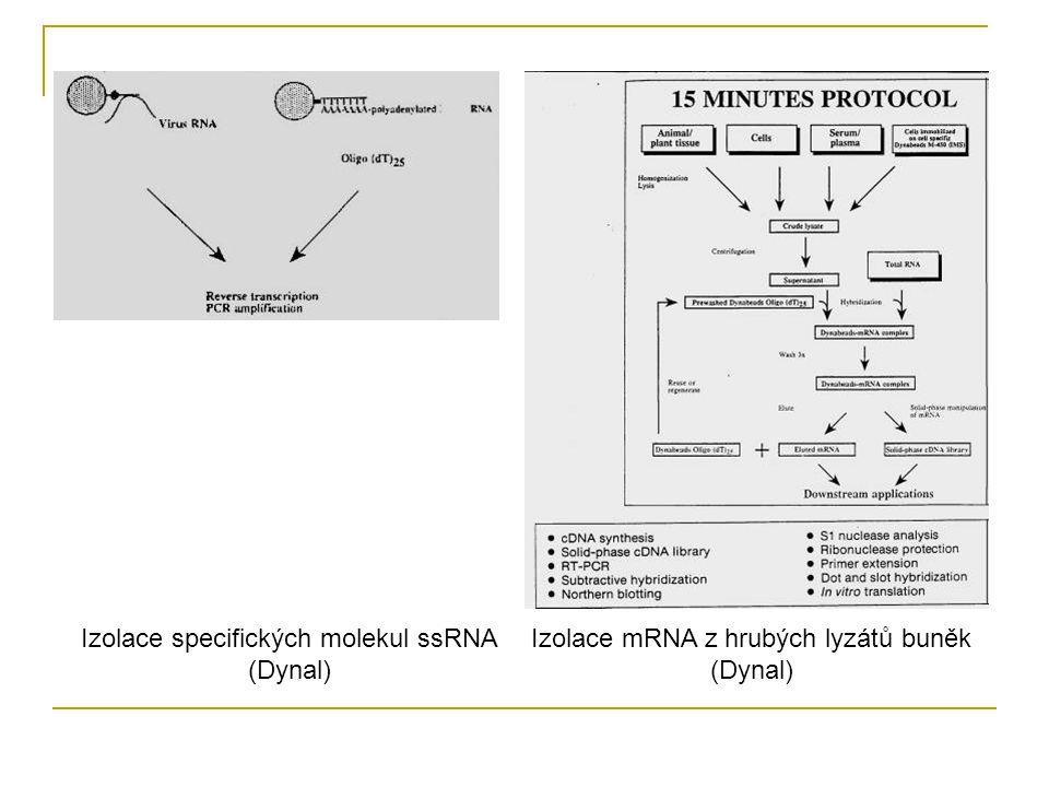 Izolace specifických molekul ssRNA (Dynal) Izolace mRNA z hrubých lyzátů buněk (Dynal)