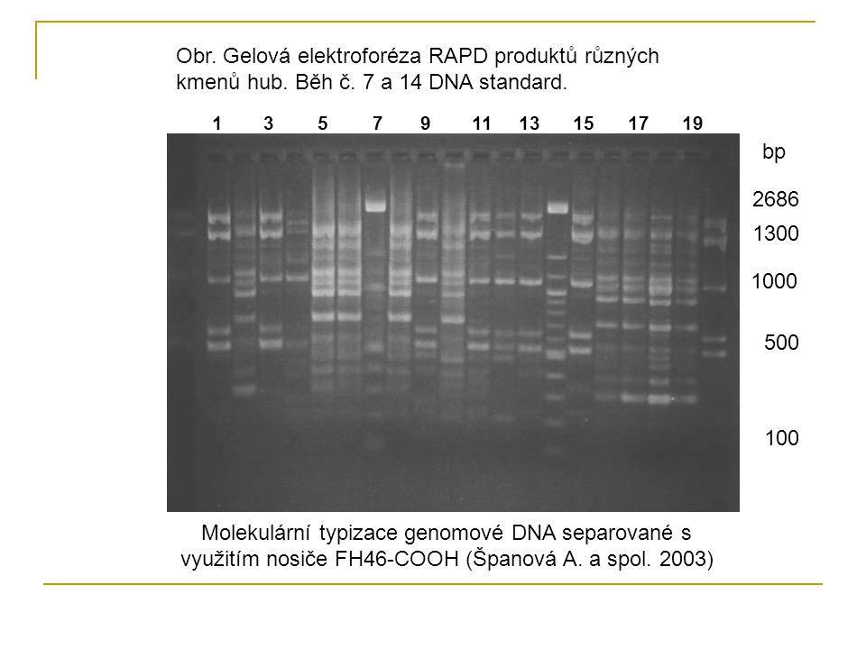 Molekulární typizace genomové DNA separované s využitím nosiče FH46-COOH (Španová A. a spol. 2003) Obr. Gelová elektroforéza RAPD produktů různých kme