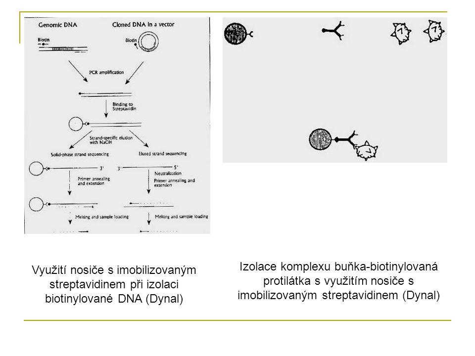 Využití nosiče s imobilizovaným streptavidinem při izolaci biotinylované DNA (Dynal) Izolace komplexu buňka-biotinylovaná protilátka s využitím nosiče