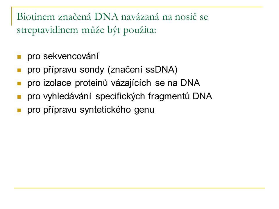 Biotinem značená DNA navázaná na nosič se streptavidinem může být použita: pro sekvencování pro přípravu sondy (značení ssDNA) pro izolace proteinů vá