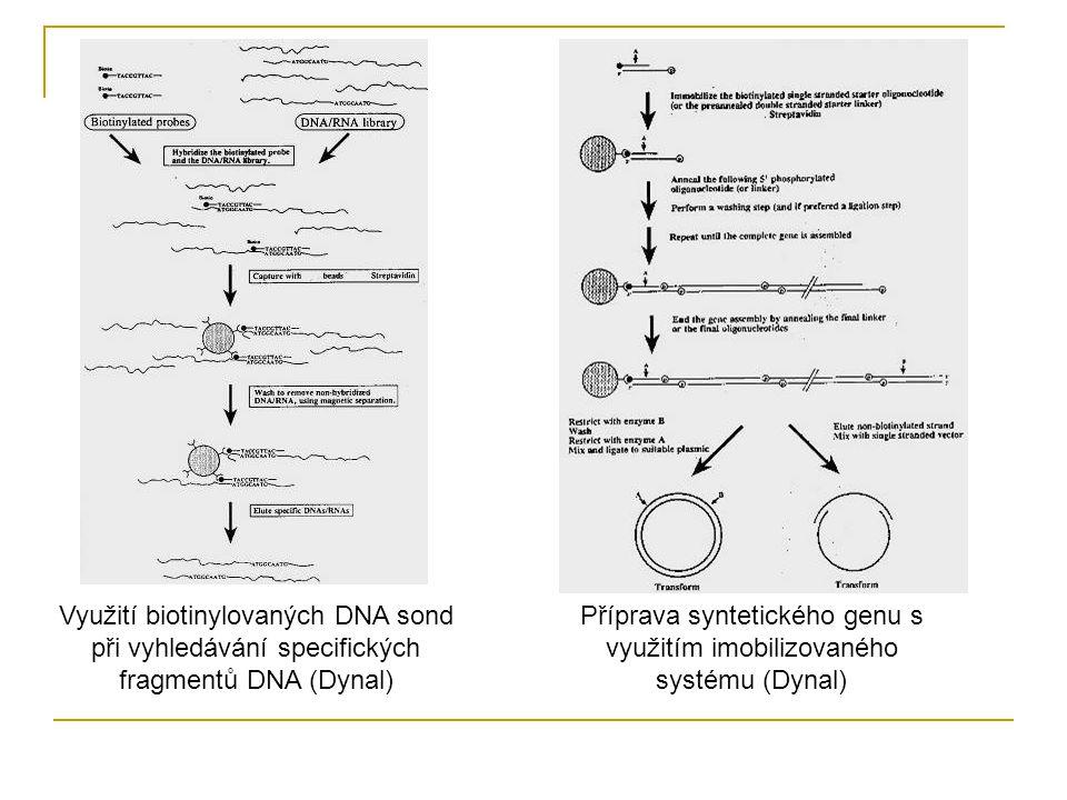 Využití biotinylovaných DNA sond při vyhledávání specifických fragmentů DNA (Dynal) Příprava syntetického genu s využitím imobilizovaného systému (Dyn