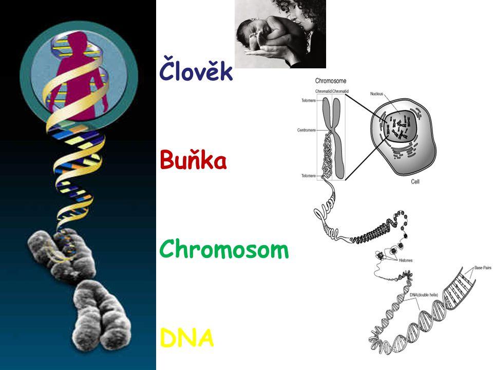 Cytogenetické vyšetření postnatální Obvykle 2-3 ml krve + 5-6 kapek Heparinu Protřepat Předat do laboratoře Objednané termín y vyšetření Kultivace Výsledek nejdříve za 7 -10 dní, obvykle za 1 měsíc