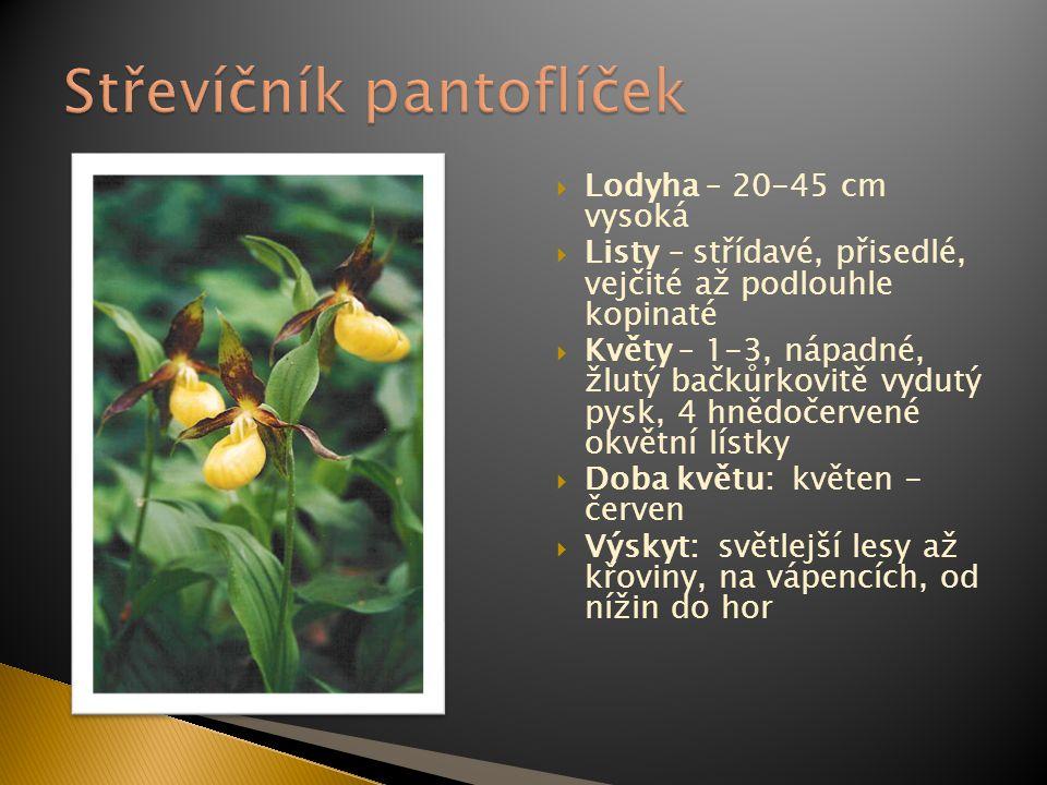  Lodyha – 20-45 cm vysoká  Listy – střídavé, přisedlé, vejčité až podlouhle kopinaté  Květy – 1-3, nápadné, žlutý bačkůrkovitě vydutý pysk, 4 hnědo