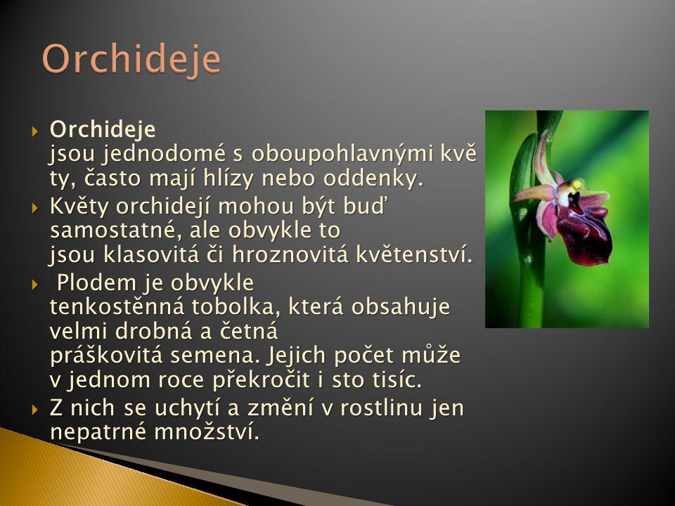 jsou jednodomé s oboupohlavnými kvě ty, často mají hlízy nebo oddenky.  Orchideje jsou jednodomé s oboupohlavnými kvě ty, často mají hlízy nebo odden