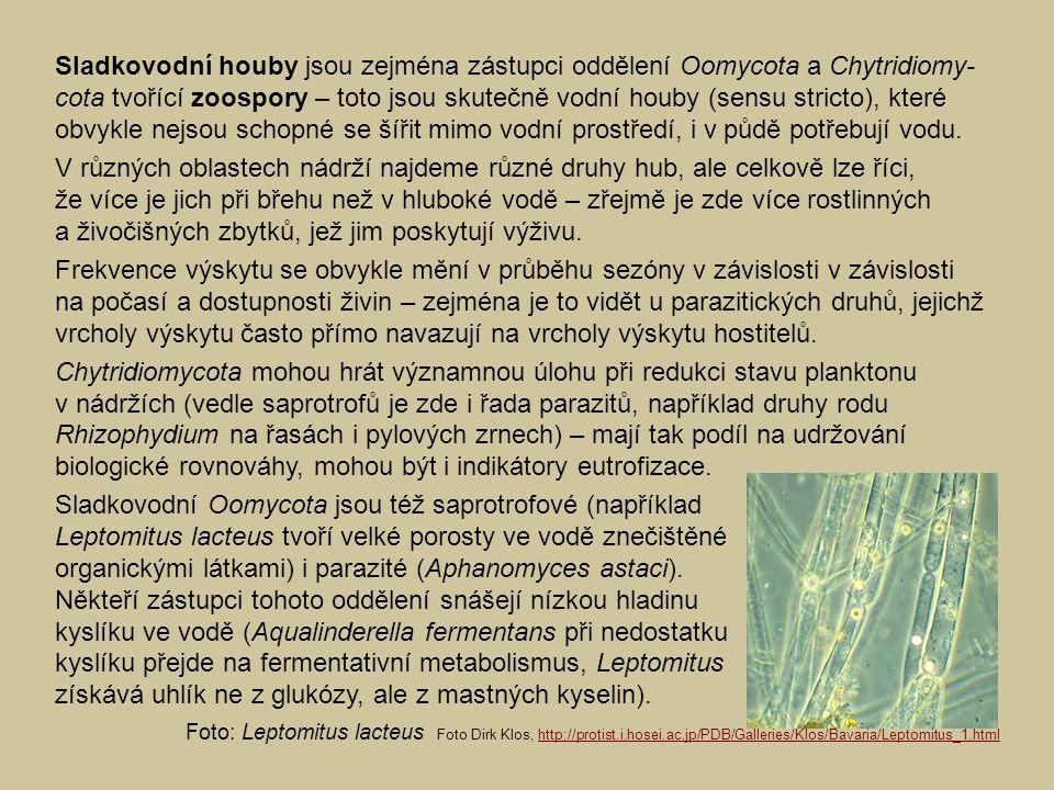 Sladkovodní houby jsou zejména zástupci oddělení Oomycota a Chytridiomy- cota tvořící zoospory – toto jsou skutečně vodní houby (sensu stricto), které