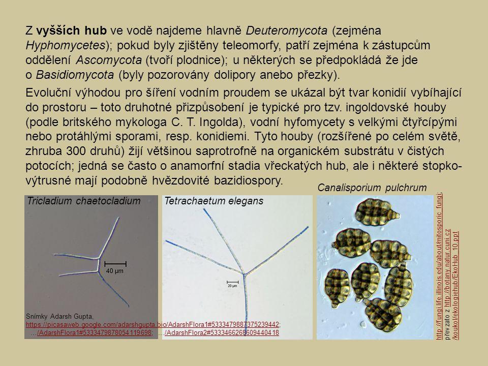 Z vyšších hub ve vodě najdeme hlavně Deuteromycota (zejména Hyphomycetes); pokud byly zjištěny teleomorfy, patří zejména k zástupcům oddělení Ascomyco