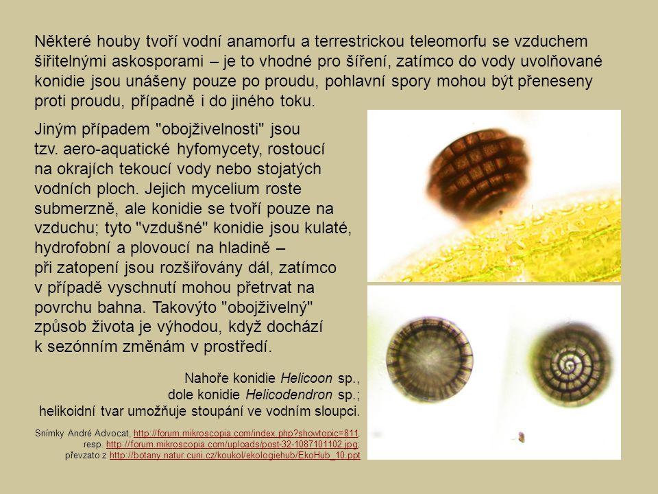 Některé houby tvoří vodní anamorfu a terrestrickou teleomorfu se vzduchem šiřitelnými askosporami – je to vhodné pro šíření, zatímco do vody uvolňovan