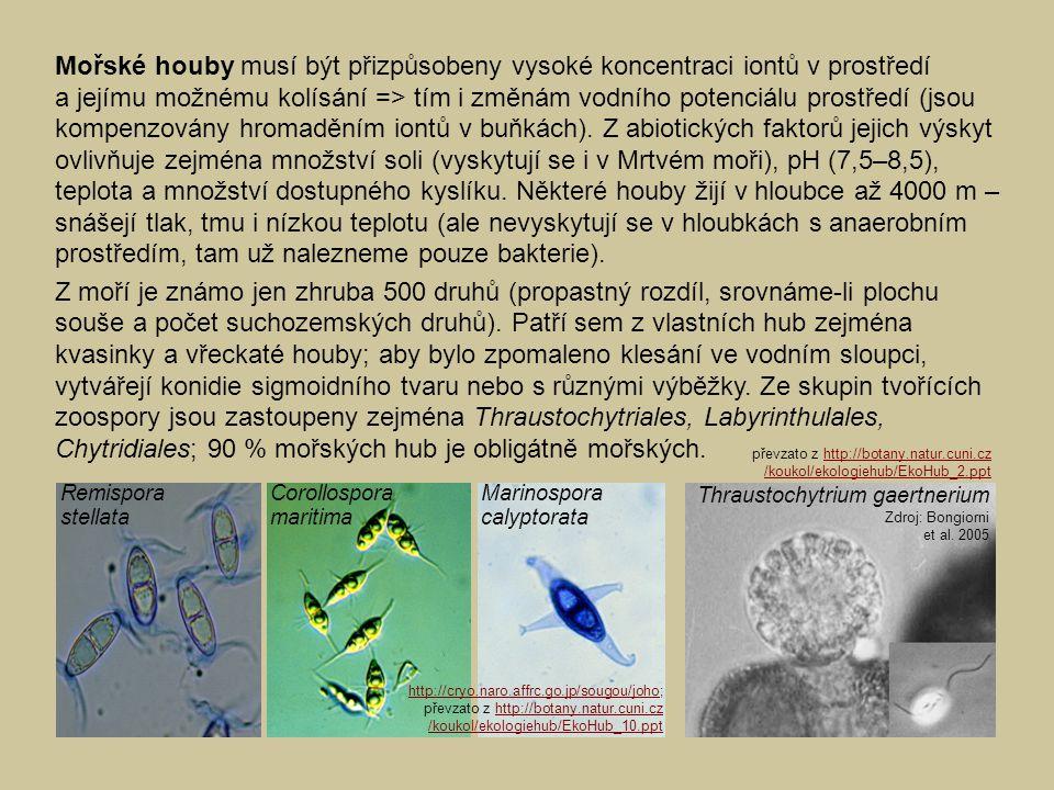 Mořské houby musí být přizpůsobeny vysoké koncentraci iontů v prostředí a jejímu možnému kolísání => tím i změnám vodního potenciálu prostředí (jsou k