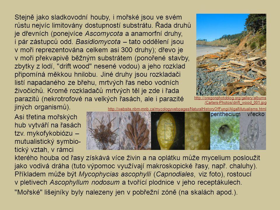 Asi třetina mořských hub vytváří na řasách tzv. mykofykobiózu – mutualistický symbio- tický vztah, v rámci kterého houba od řasy získává více živin a
