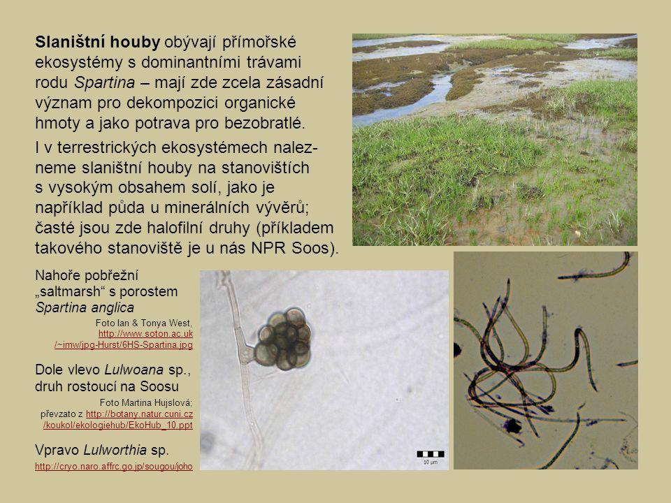 Slaništní houby obývají přímořské ekosystémy s dominantními trávami rodu Spartina – mají zde zcela zásadní význam pro dekompozici organické hmoty a ja