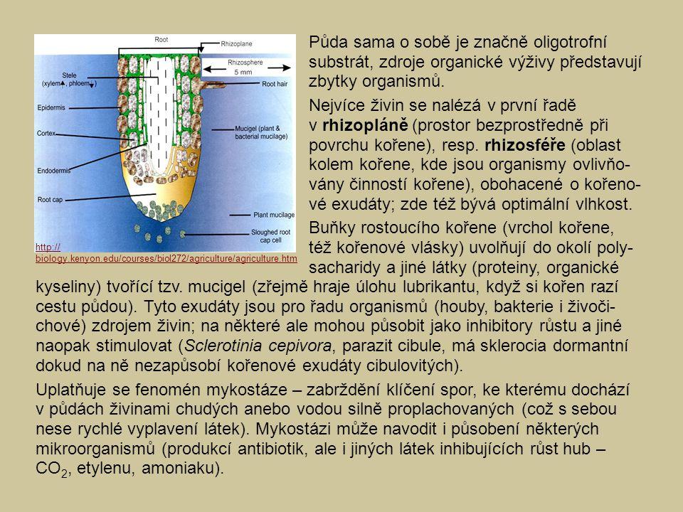 kyseliny) tvořící tzv. mucigel (zřejmě hraje úlohu lubrikantu, když si kořen razí cestu půdou). Tyto exudáty jsou pro řadu organismů (houby, bakterie