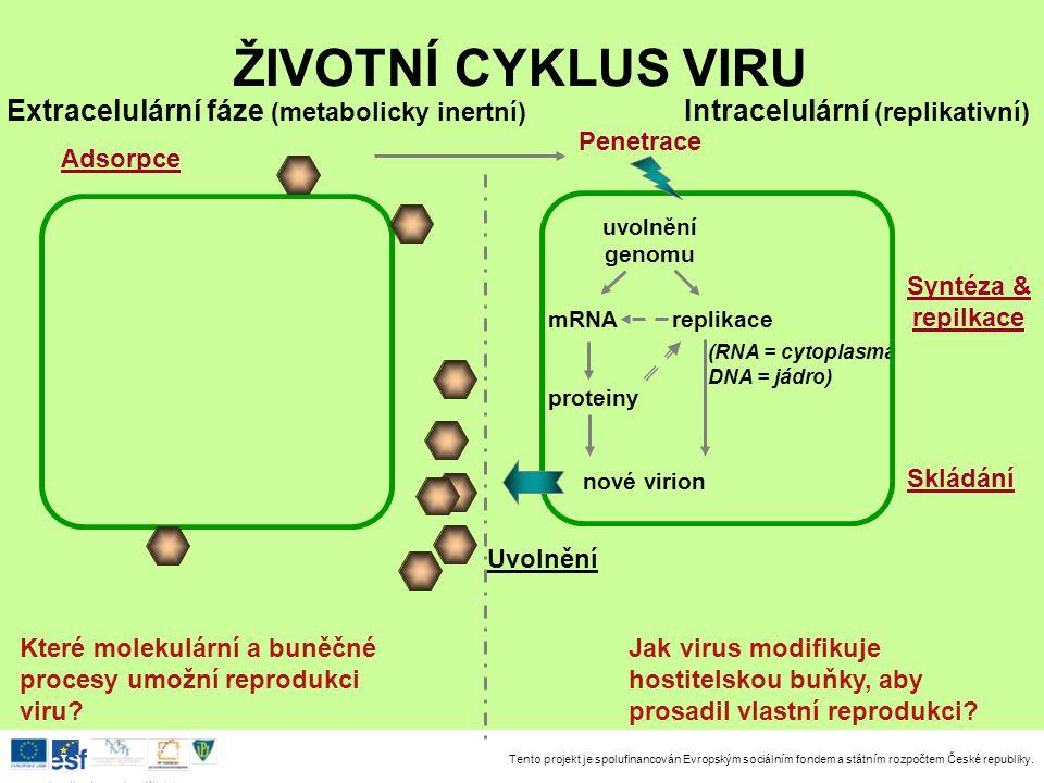Tento projekt je spolufinancován Evropským sociálním fondem a státním rozpočtem České republiky. Investice do rozvoje vzdělávání uvolnění genomu prote