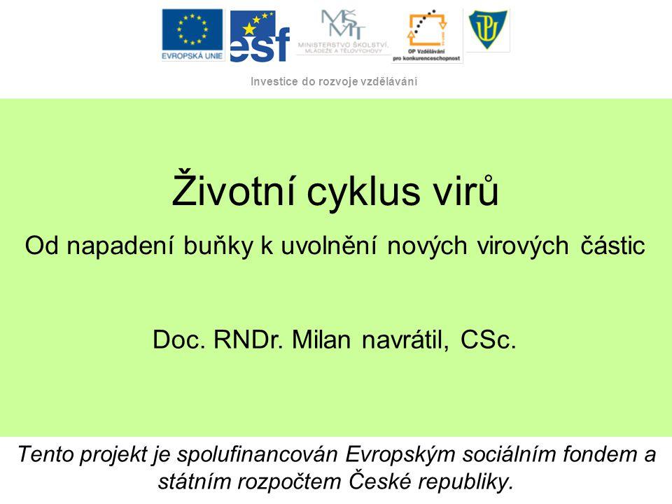 Tento projekt je spolufinancován Evropským sociálním fondem a státním rozpočtem České republiky. Investice do rozvoje vzdělávání Životní cyklus virů T