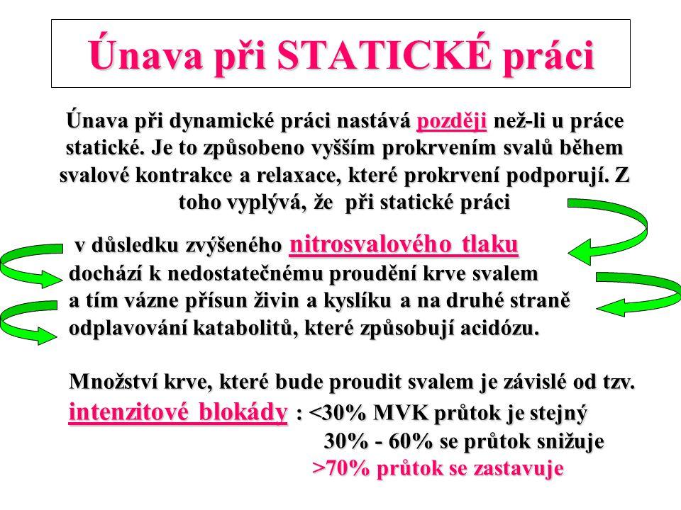 Únava při STATICKÉ práci Únava při dynamické práci nastává později než-li u práce statické. Je to způsobeno vyšším prokrvením svalů během svalové kont
