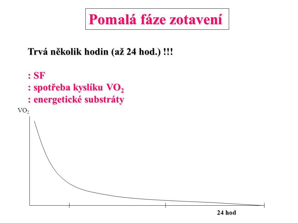 Pomalá fáze zotavení 24 hod Trvá několik hodin (až 24 hod.) !!! : SF : spotřeba kyslíku VO 2 : energetické substráty VO 2