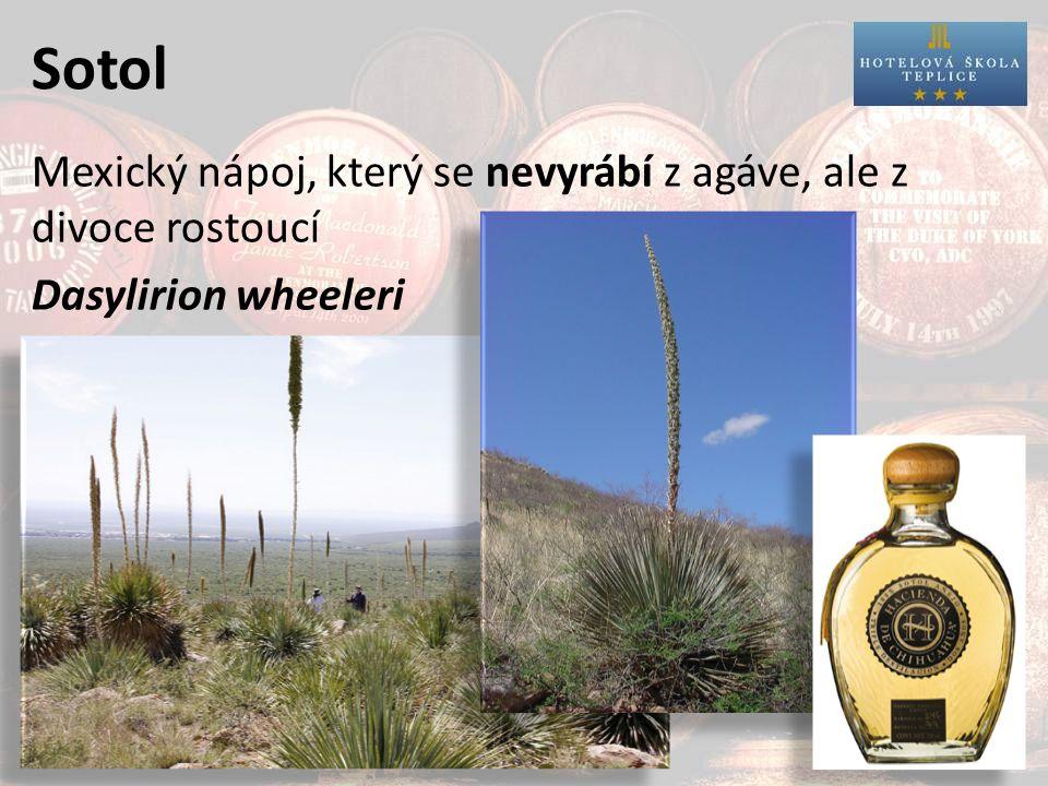 Sotol Mexický nápoj, který se nevyrábí z agáve, ale z divoce rostoucí Dasylirion wheeleri