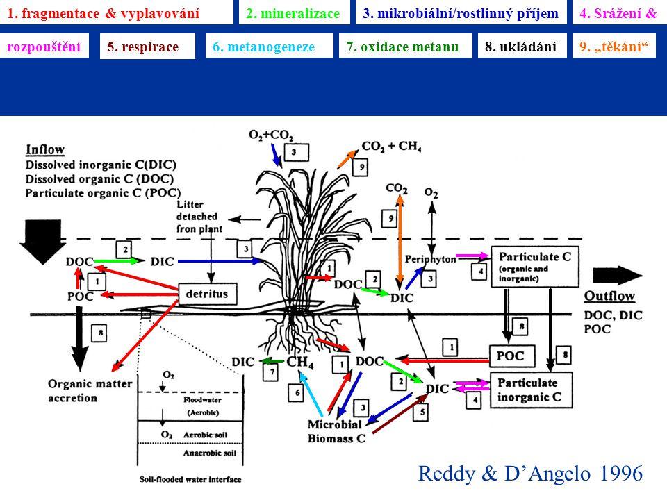 Reddy & D'Angelo 1996 1. fragmentace & vyplavování2. mineralizace3. mikrobiální/rostlinný příjem4. Srážení & rozpouštění 5. respirace 6. metanogeneze7