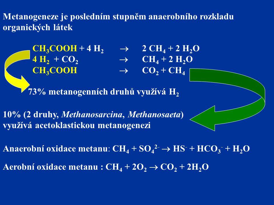 Metanogeneze je posledním stupněm anaerobního rozkladu organických látek CH 3 COOH + 4 H 2  2 CH 4 + 2 H 2 O 4 H 2 + CO 2  CH 4 + 2 H 2 O CH 3 COOH  CO 2 + CH 4 73% metanogenních druhů využívá H 2 10% (2 druhy, Methanosarcina, Methanosaeta) využívá acetoklastickou metanogenezi Anaerobní oxidace metanu: CH 4 + SO 4 2-  HS - + HCO 3 - + H 2 O Aerobní oxidace metanu : CH 4 + 2O 2  CO 2 + 2H 2 O