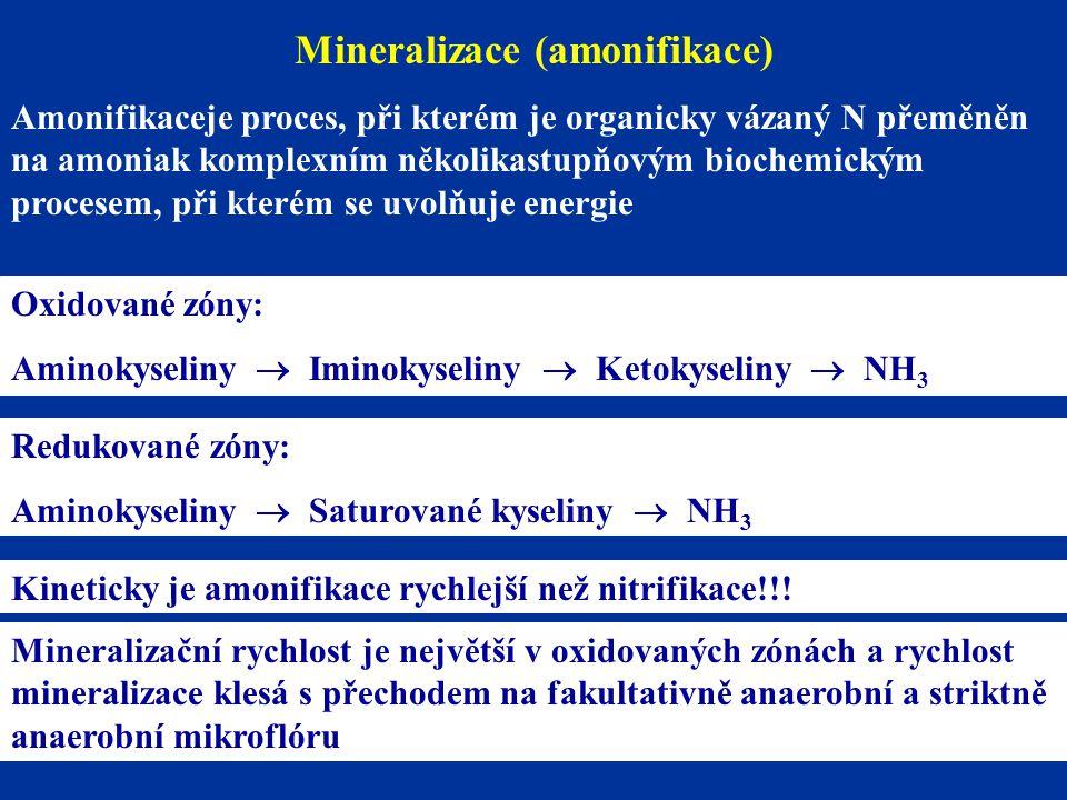 Mineralizace (amonifikace) Amonifikaceje proces, při kterém je organicky vázaný N přeměněn na amoniak komplexním několikastupňovým biochemickým procesem, při kterém se uvolňuje energie Oxidované zóny: Aminokyseliny  Iminokyseliny  Ketokyseliny  NH 3 Redukované zóny: Aminokyseliny  Saturované kyseliny  NH 3 Kineticky je amonifikace rychlejší než nitrifikace!!.