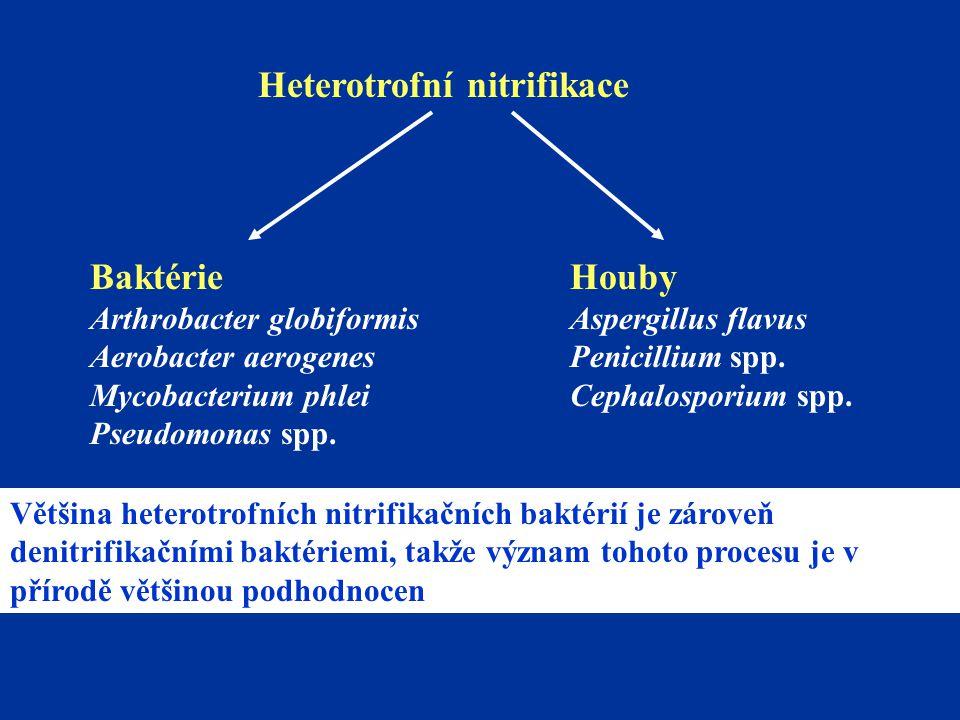 Heterotrofní nitrifikace Baktérie Arthrobacter globiformis Aerobacter aerogenes Mycobacterium phlei Pseudomonas spp. Houby Aspergillus flavus Penicill