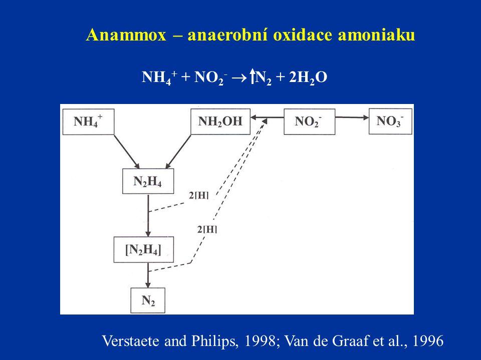 Anammox – anaerobní oxidace amoniaku NH 4 + + NO 2 -  N 2 + 2H 2 O Verstaete and Philips, 1998; Van de Graaf et al., 1996