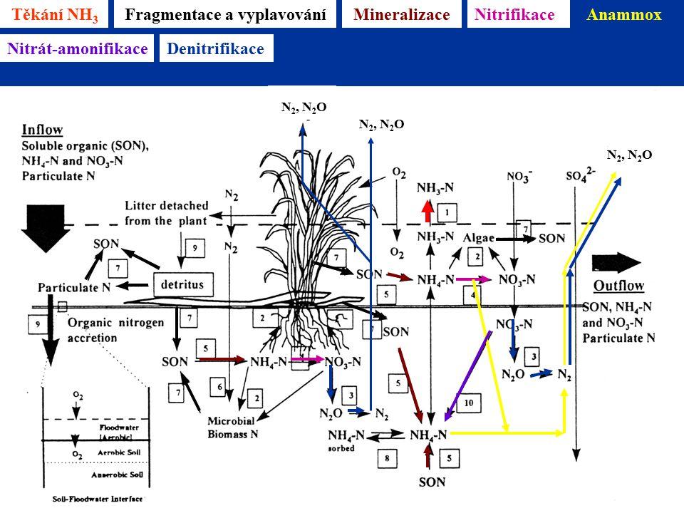 Těkání NH 3 Mineralizace Reddy & D'Angelo 1996 Fragmentace a vyplavováníNitrifikaceAnammox N 2, N 2 O Nitrát-amonifikaceDenitrifikace N 2, N 2 O