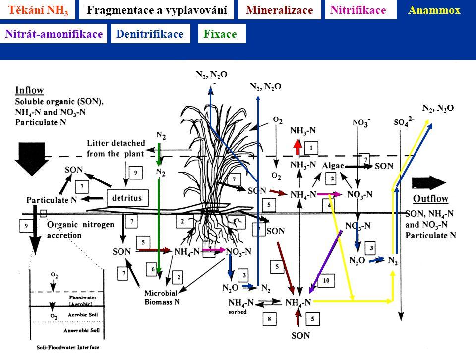 Těkání NH 3 Mineralizace Reddy & D'Angelo 1996 Fragmentace a vyplavováníNitrifikaceAnammox N 2, N 2 O Nitrát-amonifikaceDenitrifikace N 2, N 2 O Fixace