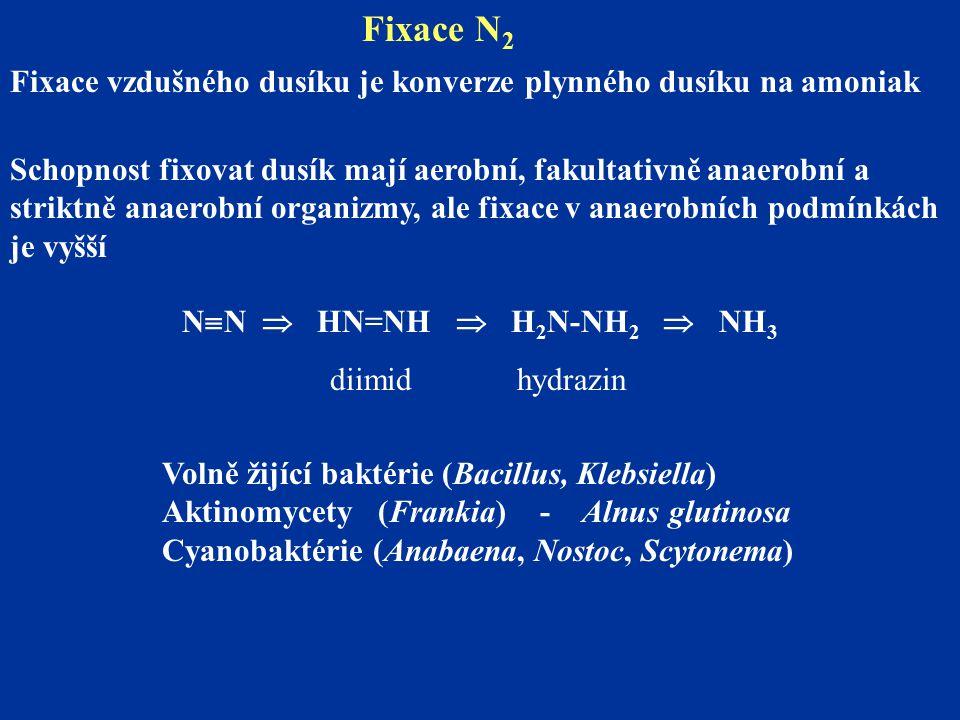 Fixace N 2 Fixace vzdušného dusíku je konverze plynného dusíku na amoniak Schopnost fixovat dusík mají aerobní, fakultativně anaerobní a striktně anaerobní organizmy, ale fixace v anaerobních podmínkách je vyšší N  N  HN=NH  H 2 N-NH 2  NH 3 diimid hydrazin Volně žijící baktérie (Bacillus, Klebsiella) Aktinomycety (Frankia) - Alnus glutinosa Cyanobaktérie (Anabaena, Nostoc, Scytonema)