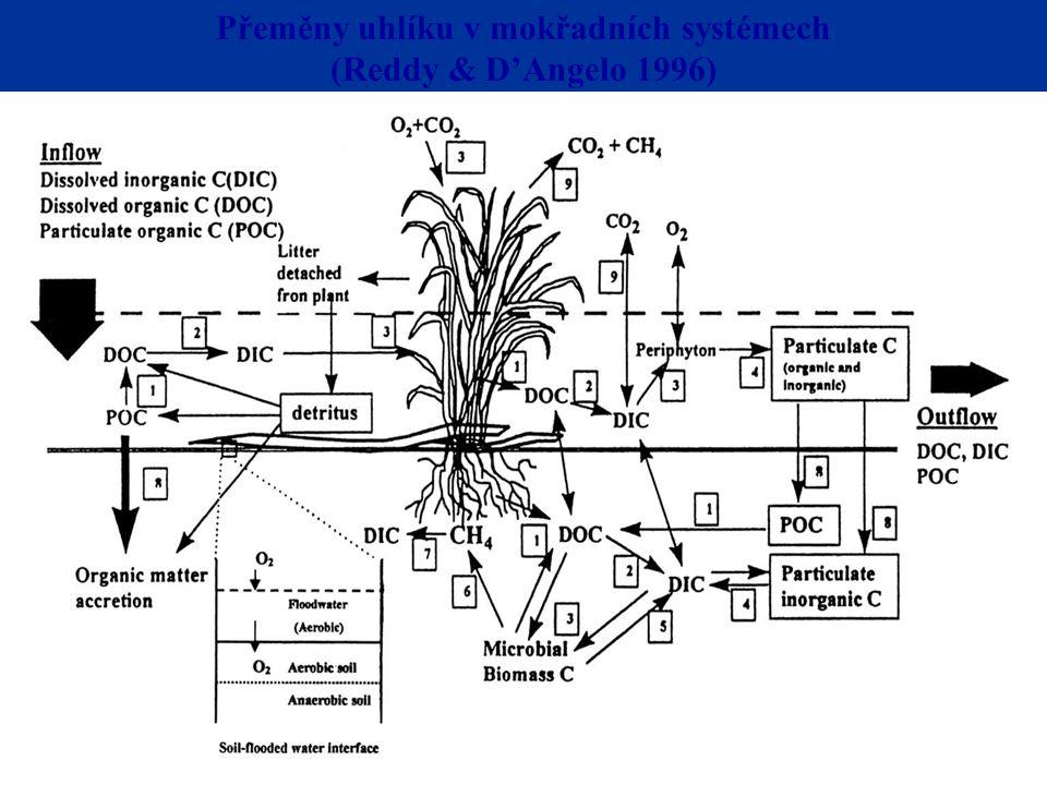 Těkání NH 3 Mineralizace Reddy & D'Angelo 1996 Fragmentace a vyplavováníNitrifikace