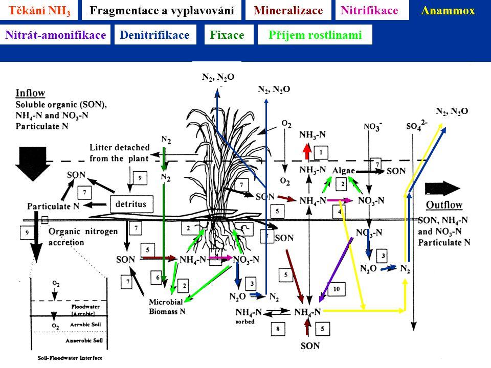 Těkání NH 3 Mineralizace Reddy & D'Angelo 1996 Fragmentace a vyplavováníNitrifikaceAnammox N 2, N 2 O Nitrát-amonifikaceDenitrifikace N 2, N 2 O FixacePříjem rostlinami