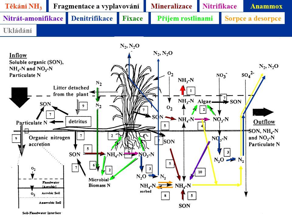 Těkání NH 3 Mineralizace Reddy & D'Angelo 1996 Fragmentace a vyplavováníNitrifikaceAnammox N 2, N 2 O Nitrát-amonifikaceDenitrifikace N 2, N 2 O FixacePříjem rostlinamiSorpce a desorpce Ukládání