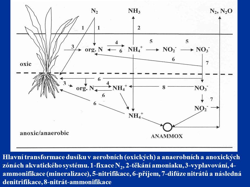 Hlavní transformace dusíku v aerobních (oxických) a anaerobních a anoxických zónách akvatického systému.