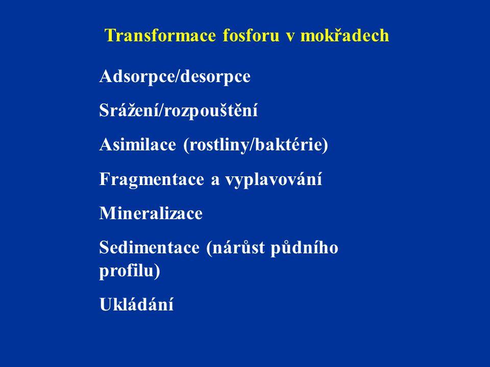 Transformace fosforu v mokřadech Adsorpce/desorpce Srážení/rozpouštění Asimilace (rostliny/baktérie) Fragmentace a vyplavování Mineralizace Sedimentac
