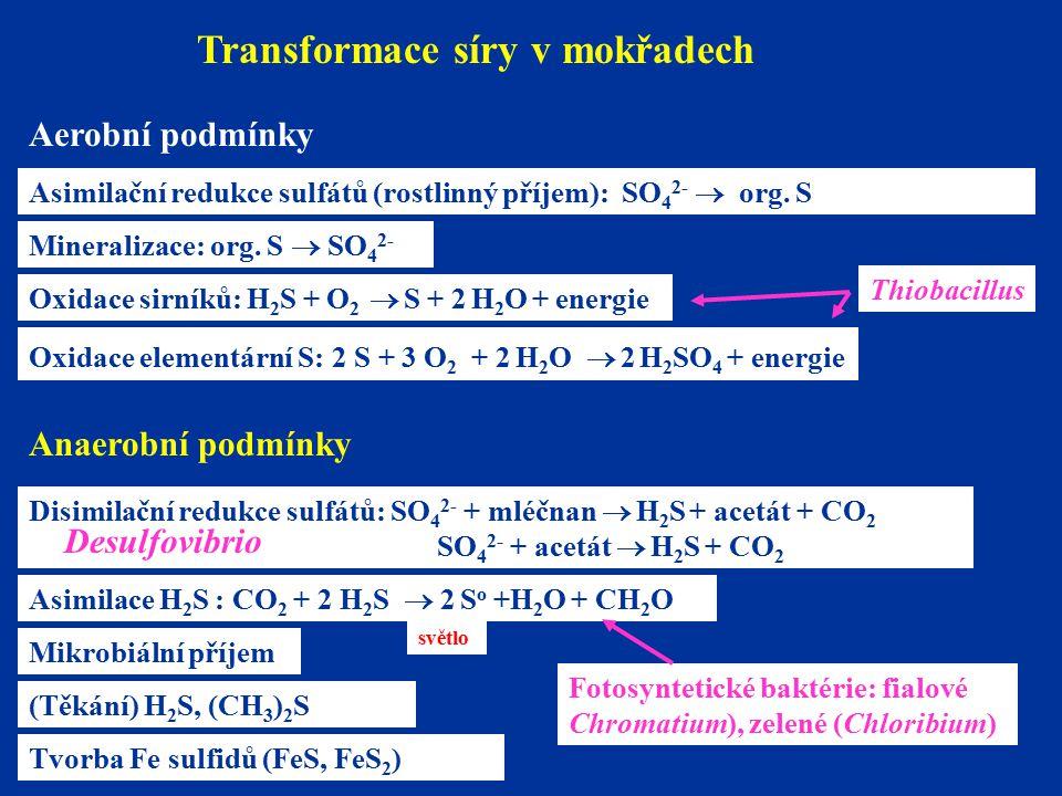Transformace síry v mokřadech (Těkání) H 2 S, (CH 3 ) 2 S Aerobní podmínky Asimilační redukce sulfátů (rostlinný příjem): SO 4 2-  org.