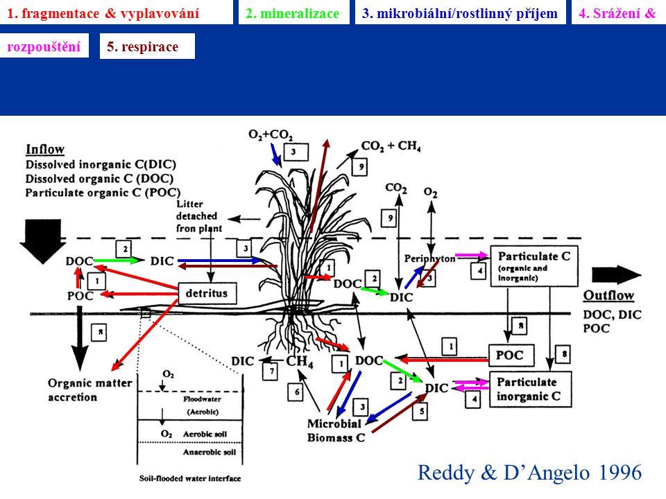 Reddy & D'Angelo 1996 1. fragmentace & vyplavování2. mineralizace3. mikrobiální/rostlinný příjem4. Srážení & rozpouštění 5. respirace