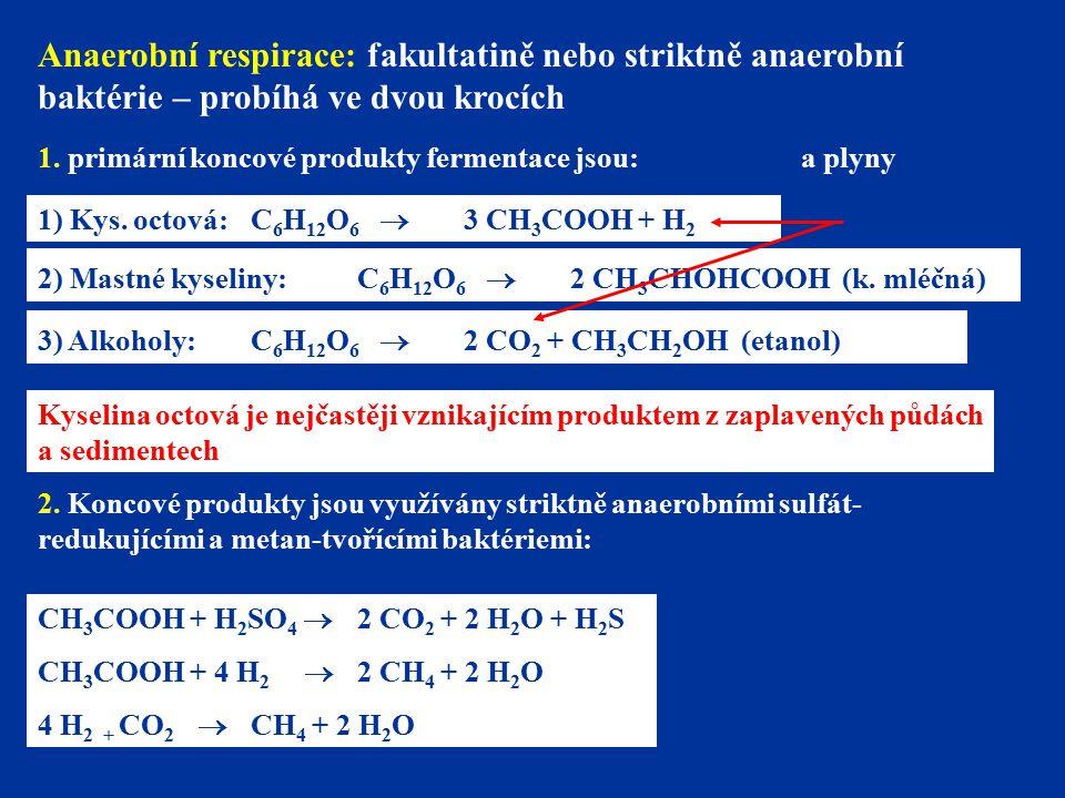 Anaerobní respirace: fakultatině nebo striktně anaerobní baktérie – probíhá ve dvou krocích 1. primární koncové produkty fermentace jsou: 1) Kys. octo