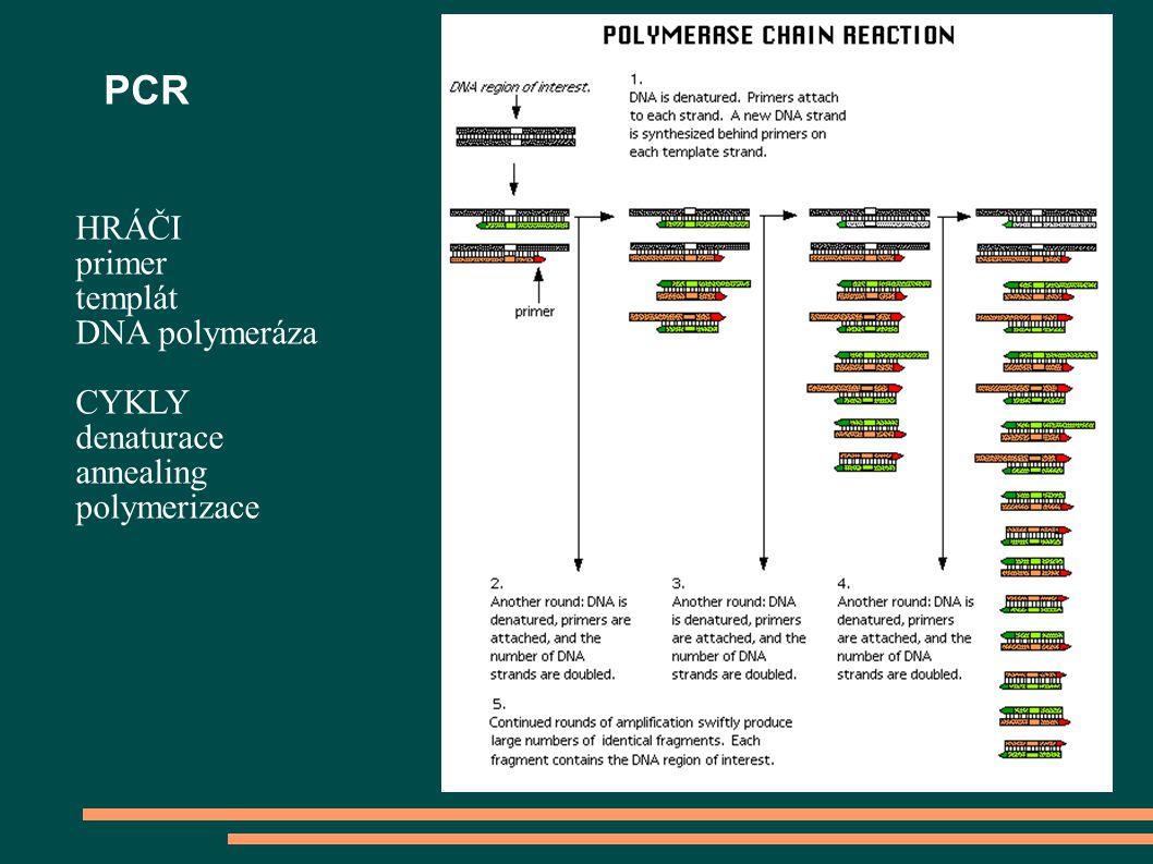 PCR HRÁČI primer templát DNA polymeráza CYKLY denaturace annealing polymerizace