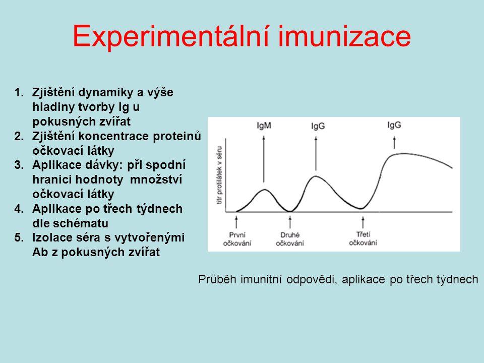 Experimentální imunizace Průběh imunitní odpovědi, aplikace po třech týdnech 1.Zjištění dynamiky a výše hladiny tvorby Ig u pokusných zvířat 2.Zjištění koncentrace proteinů očkovací látky 3.Aplikace dávky: při spodní hranici hodnoty množství očkovací látky 4.Aplikace po třech týdnech dle schématu 5.Izolace séra s vytvořenými Ab z pokusných zvířat