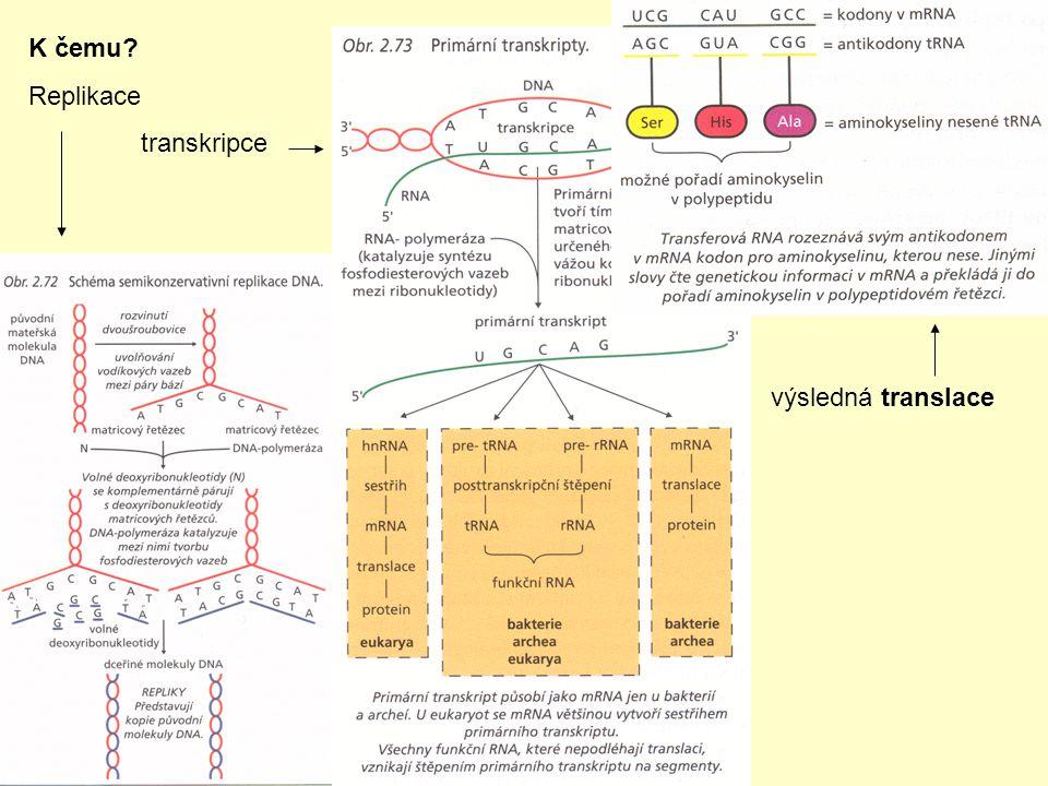 K čemu? Replikace transkripce výsledná translace