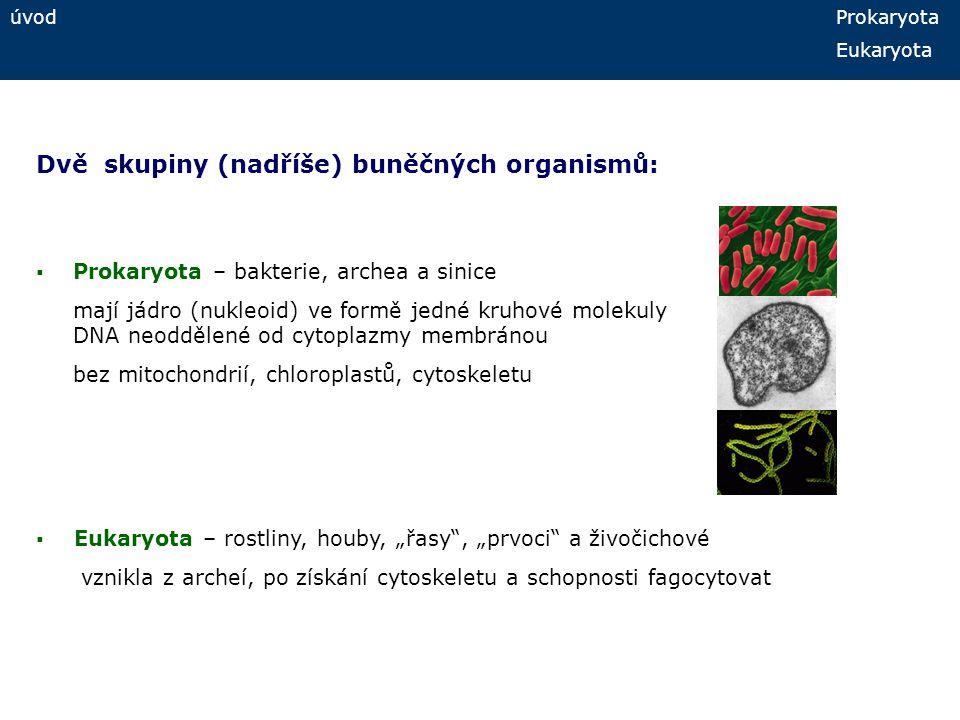 úvod Prokaryota Eukaryota Dvě skupiny (nadříše) buněčných organismů:  Prokaryota – bakterie, archea a sinice mají jádro (nukleoid) ve formě jedné kru