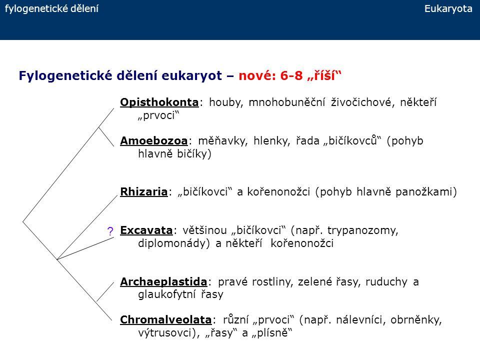 společné znaky jednobuněčných Eukaryota Jednobuněčná Eukaryota - společné znaky:  pohybové organely – bičíky (flagella), brvy (cilie), cirry, undulující membrány a membranely, panožky pseudopodia, mikrotubuly – podílí se na stavbě pohybových organel  život v tekutinách – voda, stačí i tenká povrchová blanka, tělní tekutiny (parazité, symbionti)  šíření a přečkání nepříznivých podmínek - spóry a cysty  potrava – komplexní organické molekuly v rozpuštěné formě (osmotrofie) nebo pevné částice – detrit, bakterie, jiné jednob.